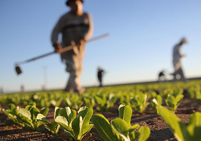 China to Encourage Private Capital in Agriculture Development