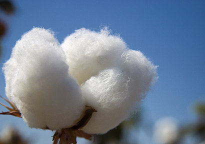 Cotton Made in Africa Focuses on China Through Workshops