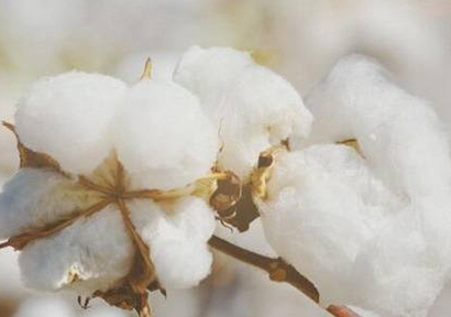 Cotton Stocks Accumulating Everywhere Outside of China
