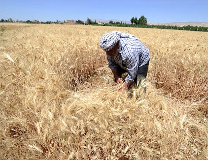 Syria to Import 1.5 Million Tons of Wheat