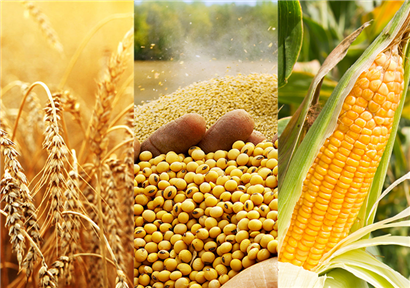 Shandong-Food-and-Agricultural-Products-Certificate-exceeded-9000