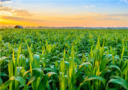Hebei focuses on the Development of Agricultural Products Processing Industry