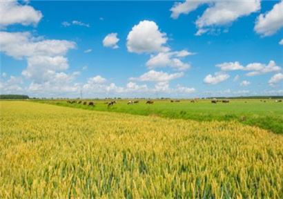 Gaoping Yechuan Town: Fully Developing Characteristic Agriculture