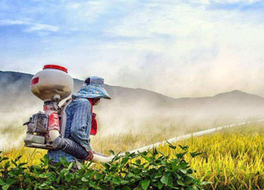 The epidemic in India continues, the prices of these pesticides are expected to rise