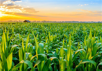 Vigorous Development of Agriculture with Plateau Characteristics