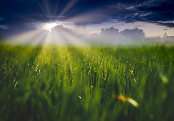 9 advantages of amino acid fertilizers!